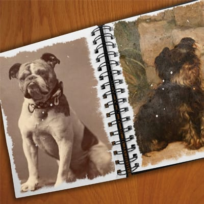 vintage pet photo album - pet pictures