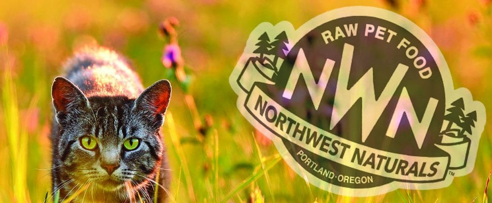 Cat on the prowl - Northwest Naturals Logo