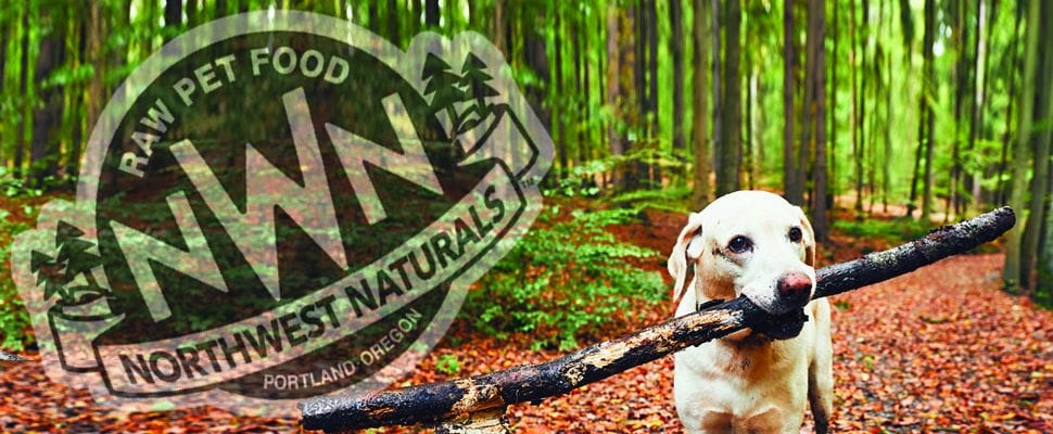 Dog Holding a stick - Northwest Naturals Logo