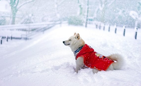 dog in winter coat in snow