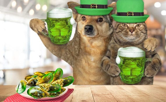 Dog and Cat wearing St. Patricks Day Hats, drinking green beer, and eating Green Lipped Mussels to celebrate