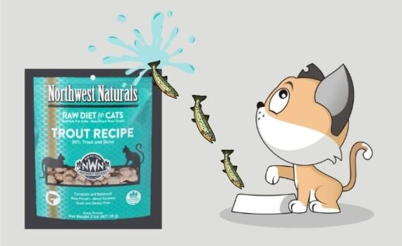 raw cat food with cartoon fish going into the cat bowl